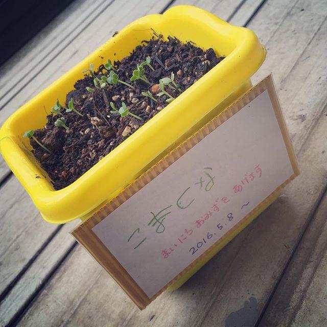しっかりやっていればちゃんと芽がでるもんです!! 土を耕して、種を蒔いて、栄養をあげる、しっかりやれば、ちゃんと実りの時期がやってくる。待つ、攻める、時期をみる、見極めて行きたいもんです。